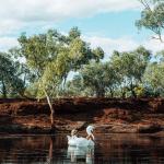 Cattle Pool Waterhole georgiarickard Red Dirt 4WD Rentals