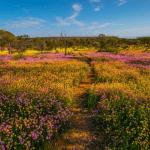 Coalseam Conservation Park lesbouclettesenvarouille Red Dirt 4WD Rentals