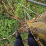 Gloucester Tree, near Pemberton Tourism Western Australia Red Dirt 4WD Rentals
